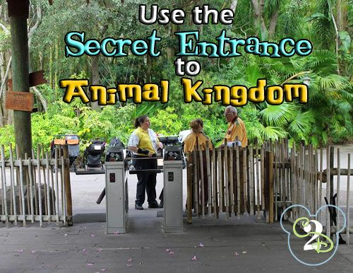 Did you know that there is a secret entrance to Animal Kingdom?