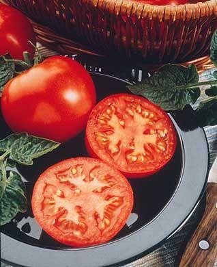Husky Red VF Hybrid Tomato Seeds - Tomato Growers Supply Company