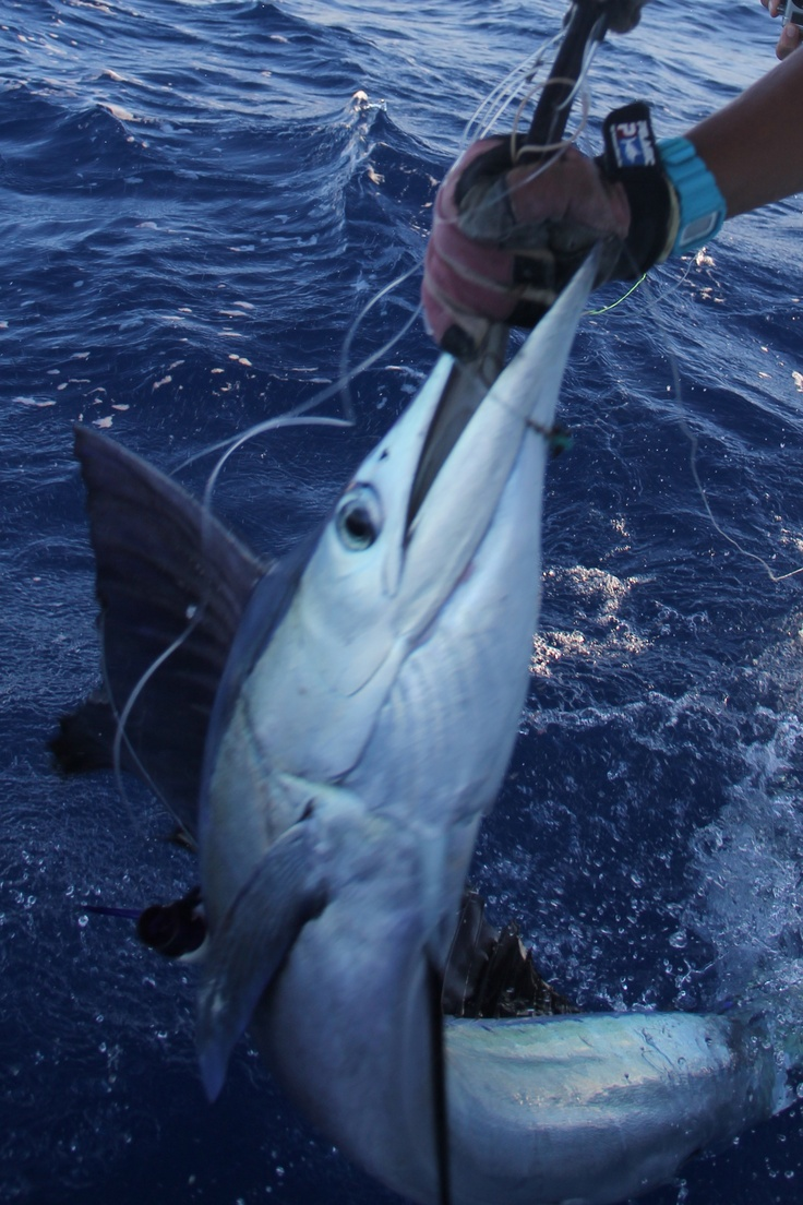 15 best billfish tag release images on pinterest for Turks and caicos fishing charters