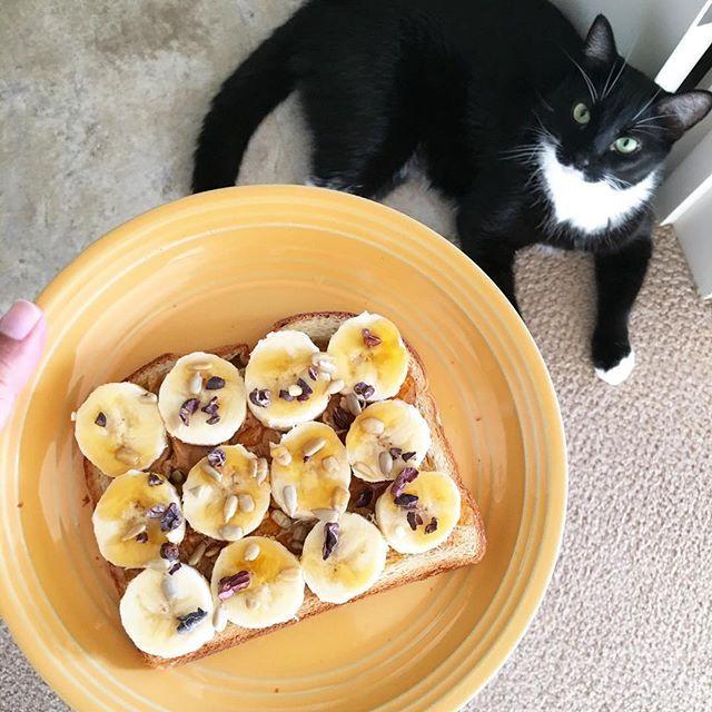 ackey518Good morning! Breakfast= bread +peanut butter+banana+sunflower seeds+cacao nibs +honey たまに見せびらかしてからいただきます✨ #E朝 #朝ごはん #暮らし #breakfast #おうちごはん #ねこ #猫 #ハワイネコ #たま #cat #タキシードキャット #タキシード猫 #tuxedocats