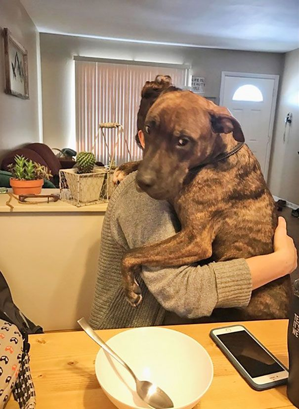 213 best dogs images on pinterest pets airedale terrier and dog rescued 1 year ago still continues to hug his new mom every day she comes back home solutioingenieria Choice Image