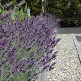 Mooi lavendel rand met grijze stenen rand