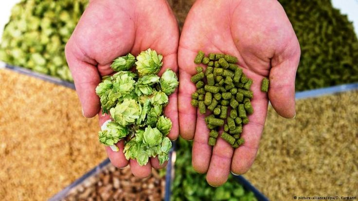 Tipos de lúpulos para elaborar cerveza - El Portal del Chacinado