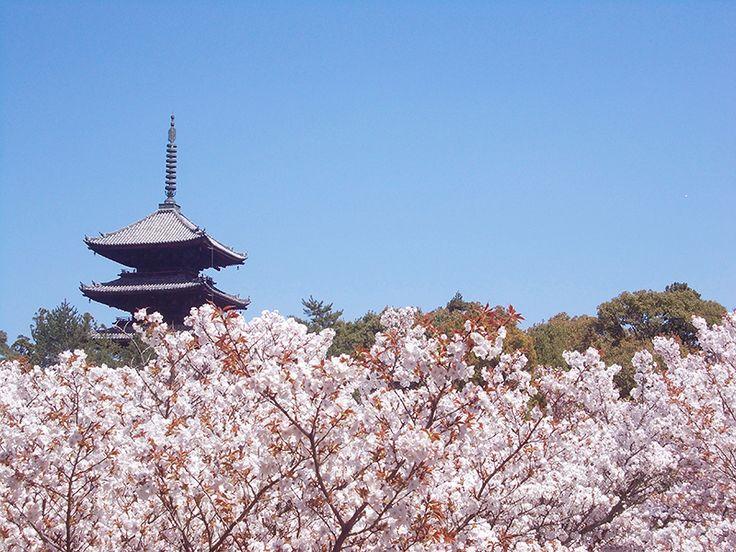 Ninnaji Kyoto, April 2014