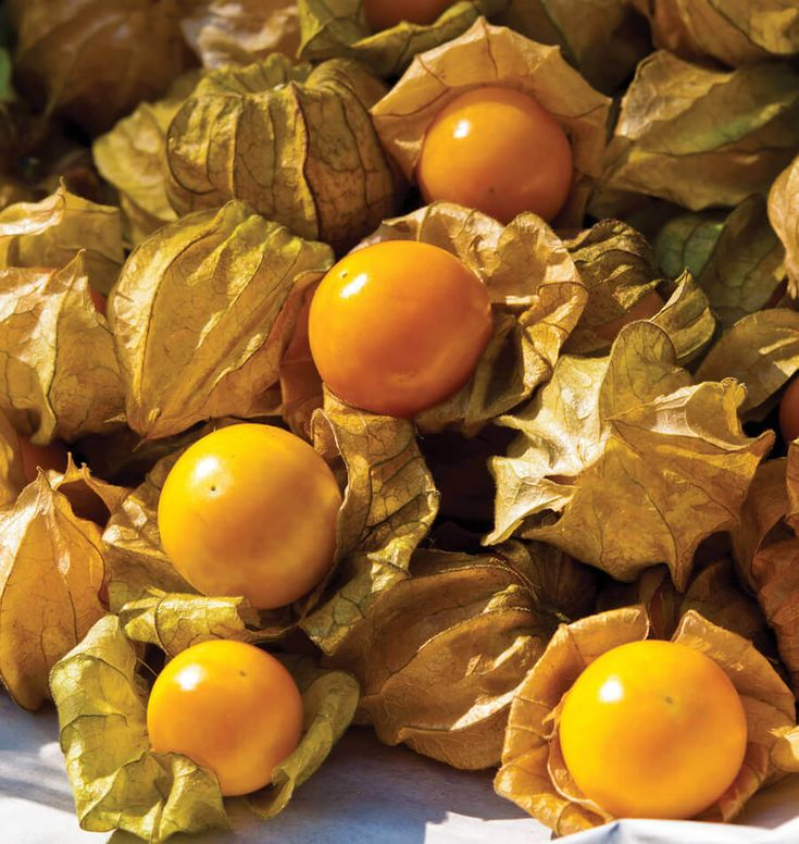 Cape Gooseberries (Aunt Molly's Ground Cherry): Plant seeds in spring and experience the traditional flavor.