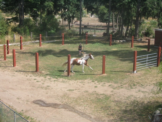 Round Pen Safety Related Keywords & Suggestions - Round Pen Safety