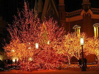 24 best twinkle lights images on Pinterest | Twinkle lights ...