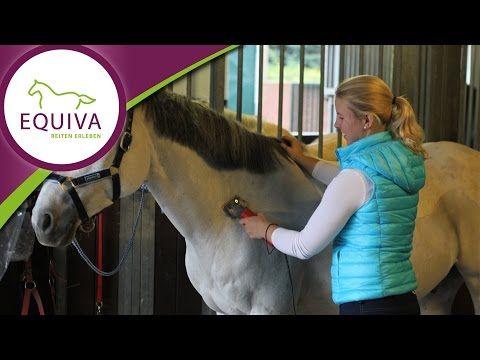 Pferde scheren - die optimale Pferdeschur finden!Equiva Blog