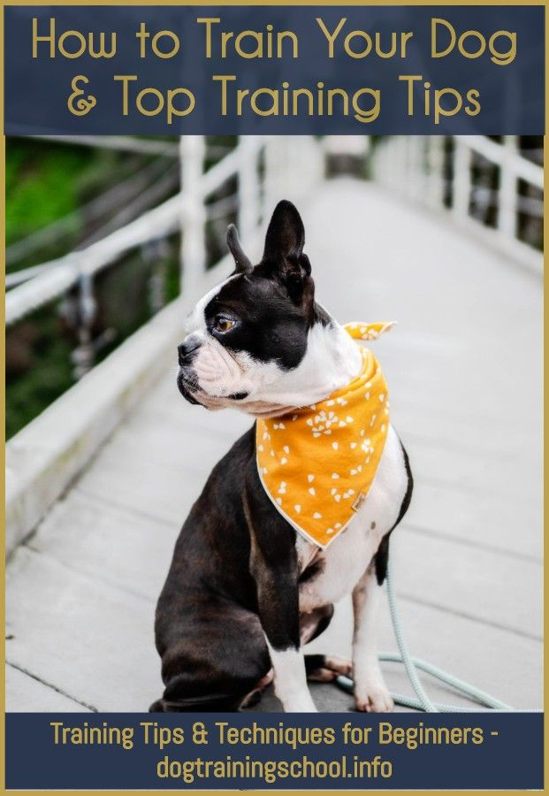 How To Become A Dog Trainer In Michigan Puppy Training Foster Dog Dog Training