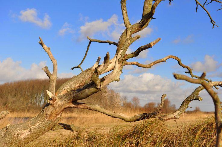 Waterwingebied Heemskerk (foto Alex Keus)
