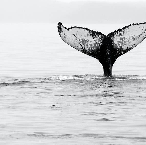Nautical room Whale Tail Download Print Beach Art Print Black and White