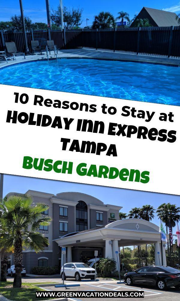 86972360762d9ddc421534f940be4775 - Motels Near Busch Gardens Tampa Bay