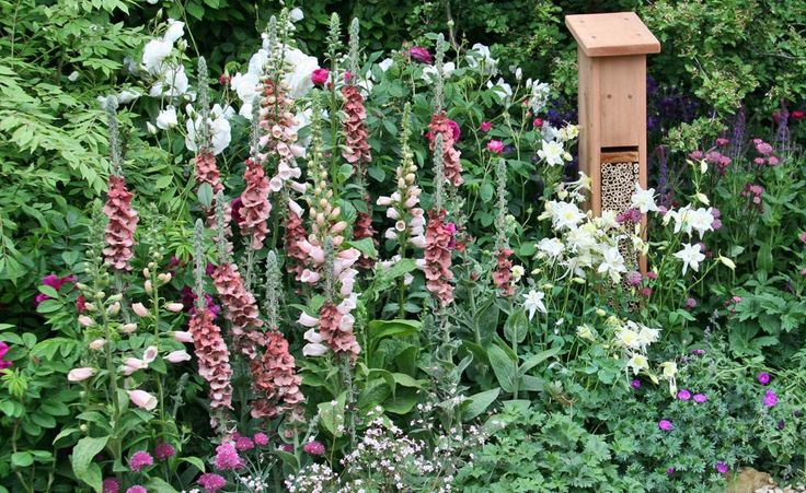 Lust auf einen eigenen Naturgarten? So geht's