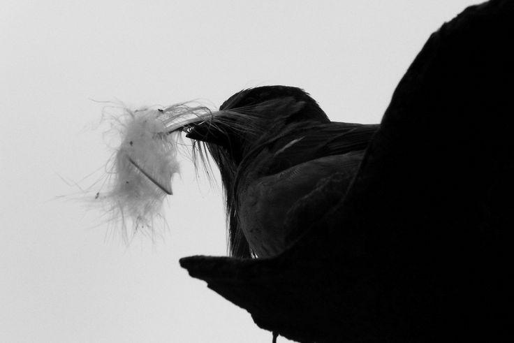 A litle bird