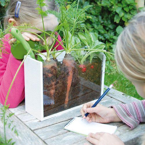 Jeu éducatif pour enfant malette étude croissance des plantes