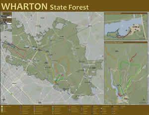 Wharton State Forest - NJ