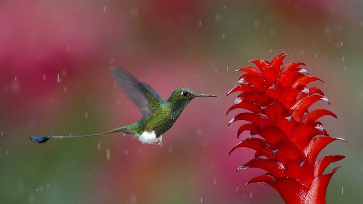 3840x2160 hummingbird 4k mac desktop wallpaper
