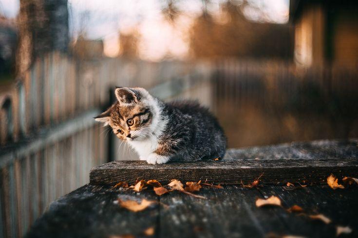 Котенок: karhu53