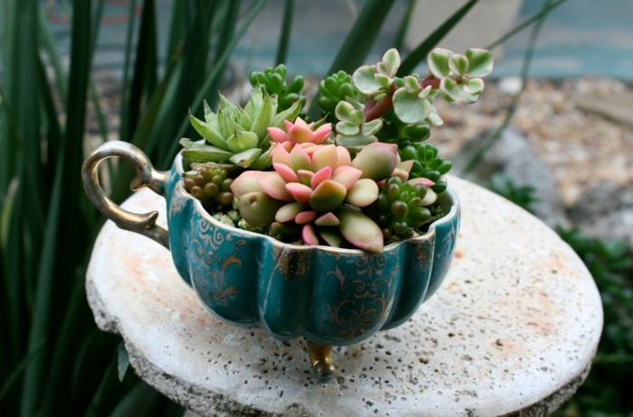 7 besten succulenten bilder auf pinterest sukkulenten for Dekorationsideen garten