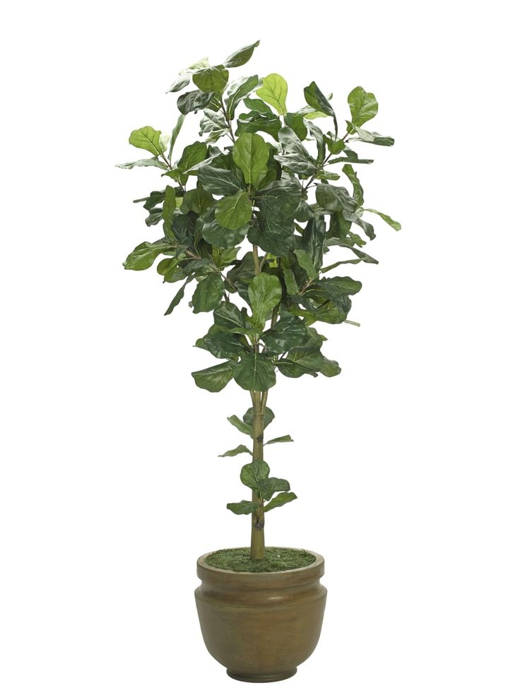faux Fiddle leaf Tree, 7ft. from NDI