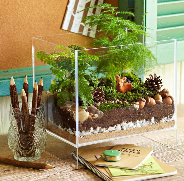 Woodland Terrarium. I love the idea of incorporating nature into the classroom in very real ways - instead of just pictures of plants and animals, have real plants and real animals. Having writing utensils and paper available encourages literacy and observation skills.