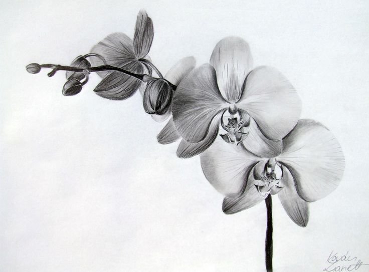 orchid tattoo designs - Google Search