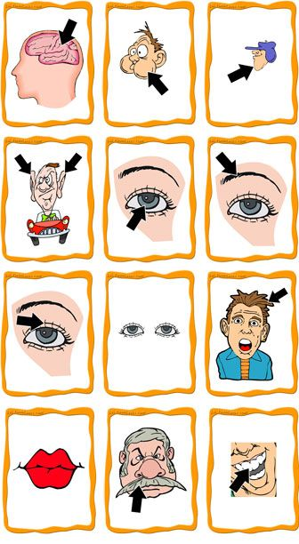 FlashCards Preview - Body Parts Flashcards (Set C) These flashcards are strictly picture of parts of the face and head