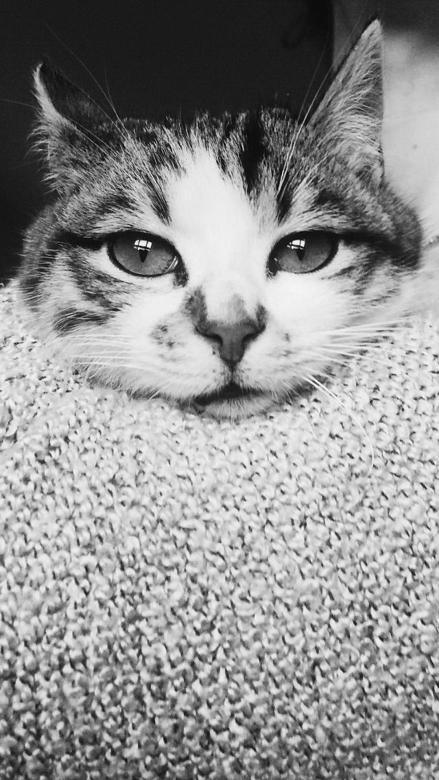 My twice cat.