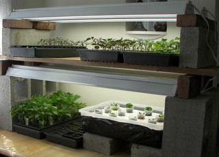 17 Best 1000 images about Indoor Gardens on Pinterest Gardens