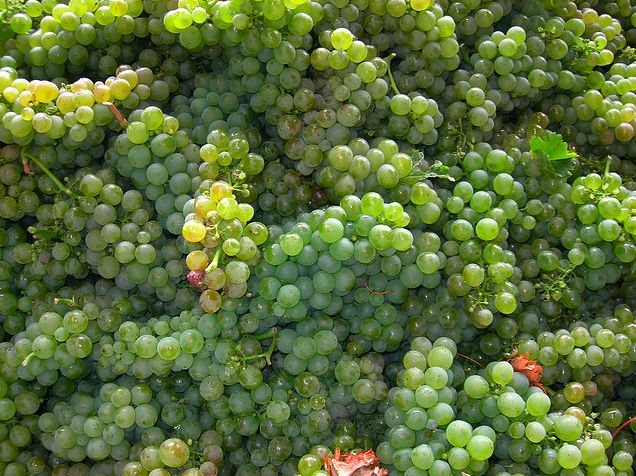 Great Sauvignon Blancs- Wine reviews + 5 top picks. I've got to tell you, Sauvignon Blanc is just not that good! Seriously, what is with these wines? They lack the power, depth, complexity and aging potential of so many great white wines, yet people still gravitate towards them. What is up with that?... http://www.snooth.com/articles/sauvignon-blanc-2143/