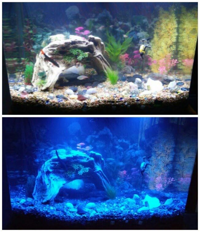 45 Gallon Curved Fish Tank for sell