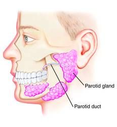 parotid-gland Is Your Cell Phone Causing Your Teeth to Decay? (and how to stop it) | OraWellness Blog