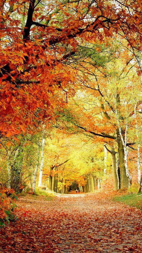 Red Foliage (wide) Samsung Galaxy S3 Wallpaper