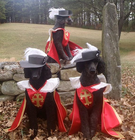 Three 3 Musketeer Dog Pet Costume Outfit By MattiOnline On