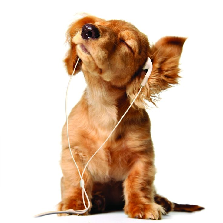 Rockin' OutPuppies, Ipods, Pets, Ears, Listening To Music, Dogs Lovers, Puppy'S, Rocks, Animal