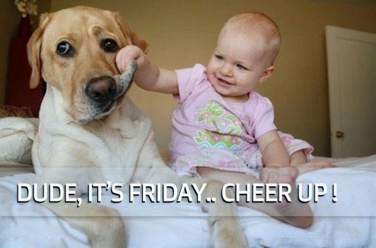: Happy Friday, Cheer Up, Funny Pictures, Funny Friday, Pet, Friday Funny, Baby Dogs, Dogs Faces, Kid