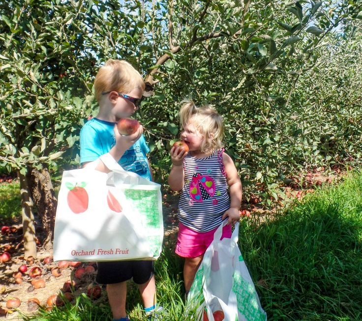 869ba2b5c8ba294d51a41d0af75dbd3c grandchildren apples