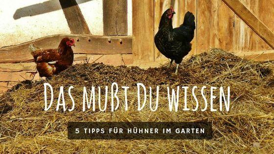 Hühner im Garten halten – Erfahrungen und Tipps