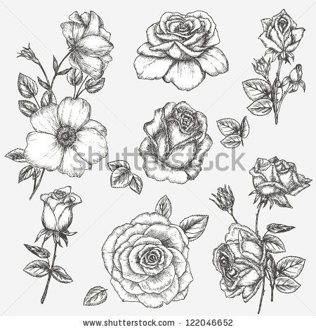 stock vector : Flower set. Vintage rose collection with , floral elements, buds and leafs