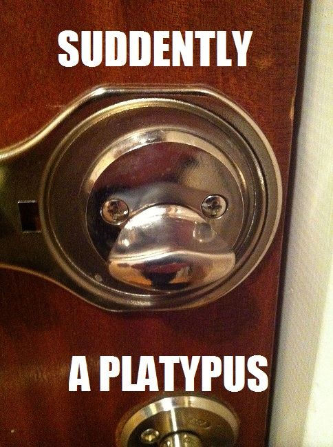Suddenly a platypus.