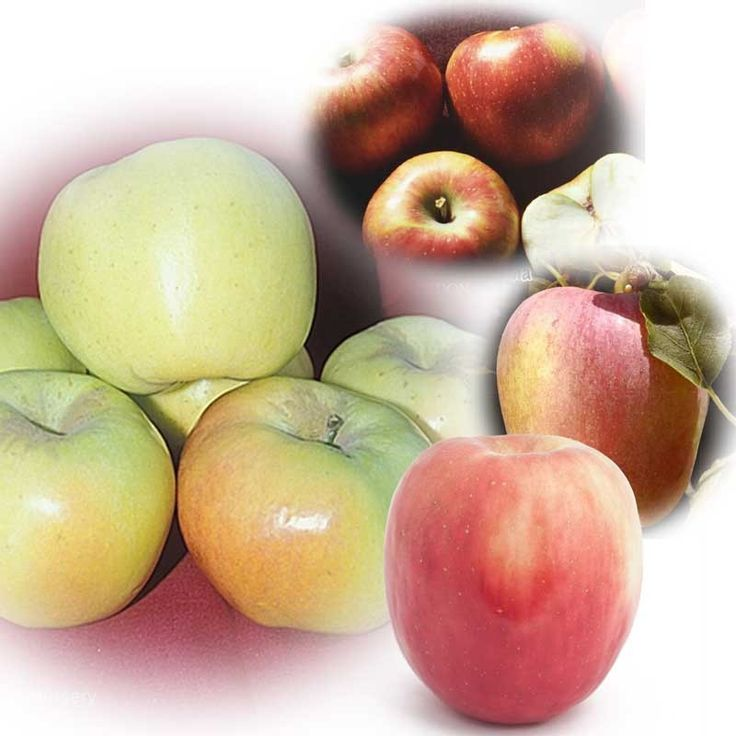 2009 garden addition, Low Chill Apple Multi Fruit tree: Dorsett Golden, Anna, Gordon, and Fuji