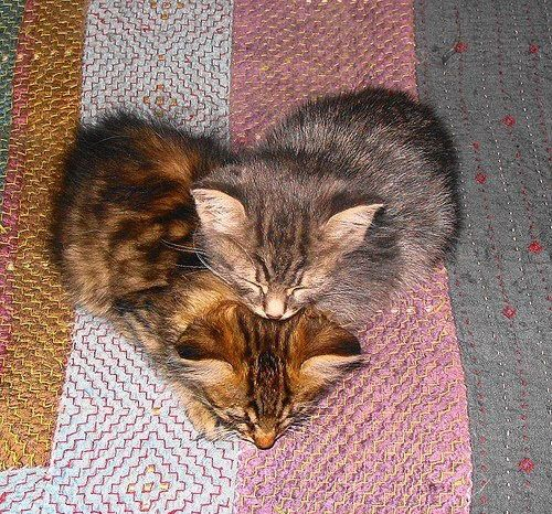 A heart made of kittens