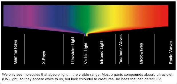 Light spectrum We only see molecules that absorb light in the visible range. Most organic compounds absorb ultraviolet (UV) light, so they appear white to us, but look colorful to creatures like bees that can detect UV.