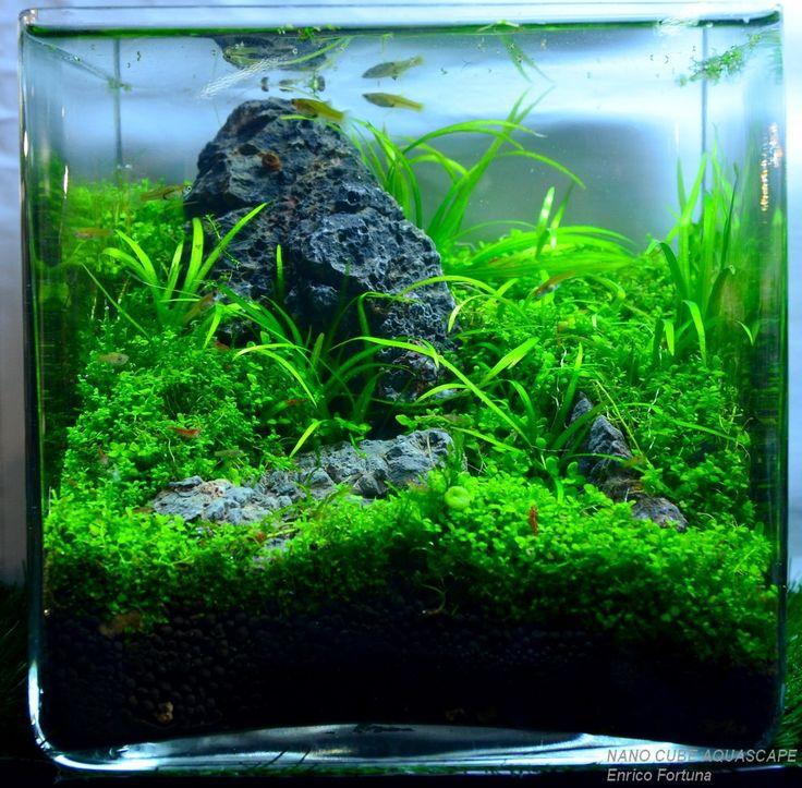 94 best images about nature aquarium aquascaping by for Aquarium cube