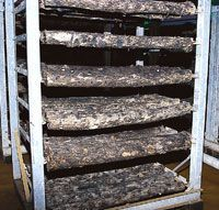 Mushroom Farming. A log will produce mushrooms for many years unless allowed to dry out. Growing mushrooms takes a knack, careful attention to important cultural details, hard work & careful procedures.  It's a delicate balance of encouraging & suppressing the growth of desirable a & undesirable microorganisms.  One key to success is good record keeping to which techniques are most productive.