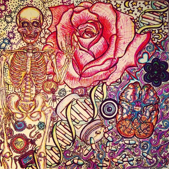Most recent work of art...cover for my #USMLE binder #medschool #anatomy #smartwork #knowlegdeispower