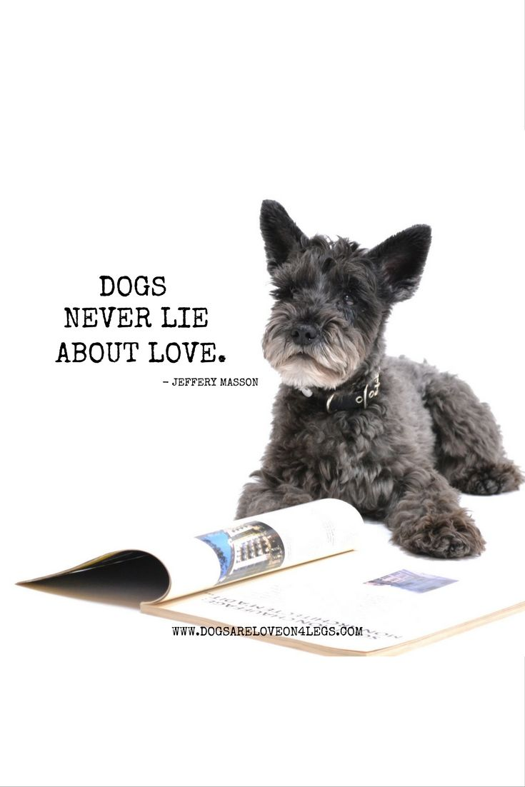 Dog Quote Dog S Never Lie About Love Cute Animal Quotes Dog