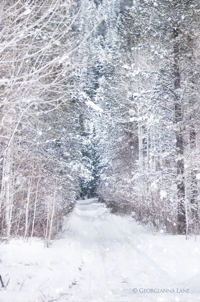 Time to cuddle up in front of the fire with a good book. Check out our libraries board for inspiration. #libraries Birch Grove in Snow, Stevens Pass in Washington