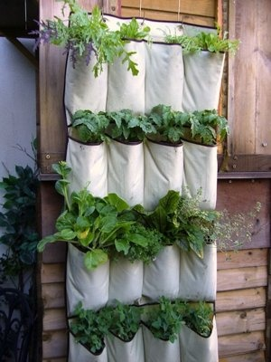 Ideas for gardening in small spaces
