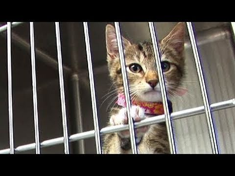 Having Trouble Affording Veterinary Care? : The Humane Society of the United States